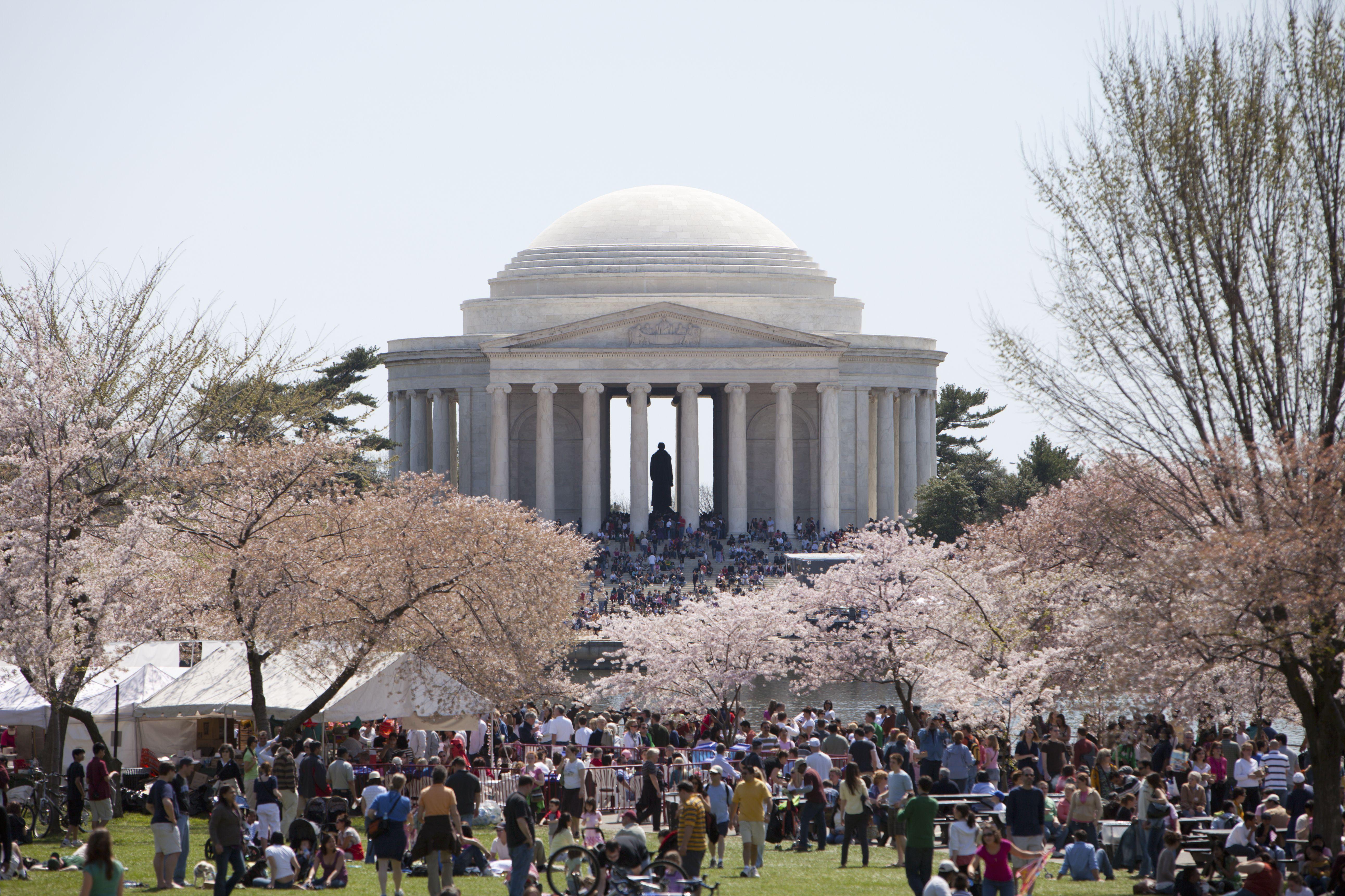 The annual Cherry Blossom Festival at the Jefferson Memorial in Washington, D.C.