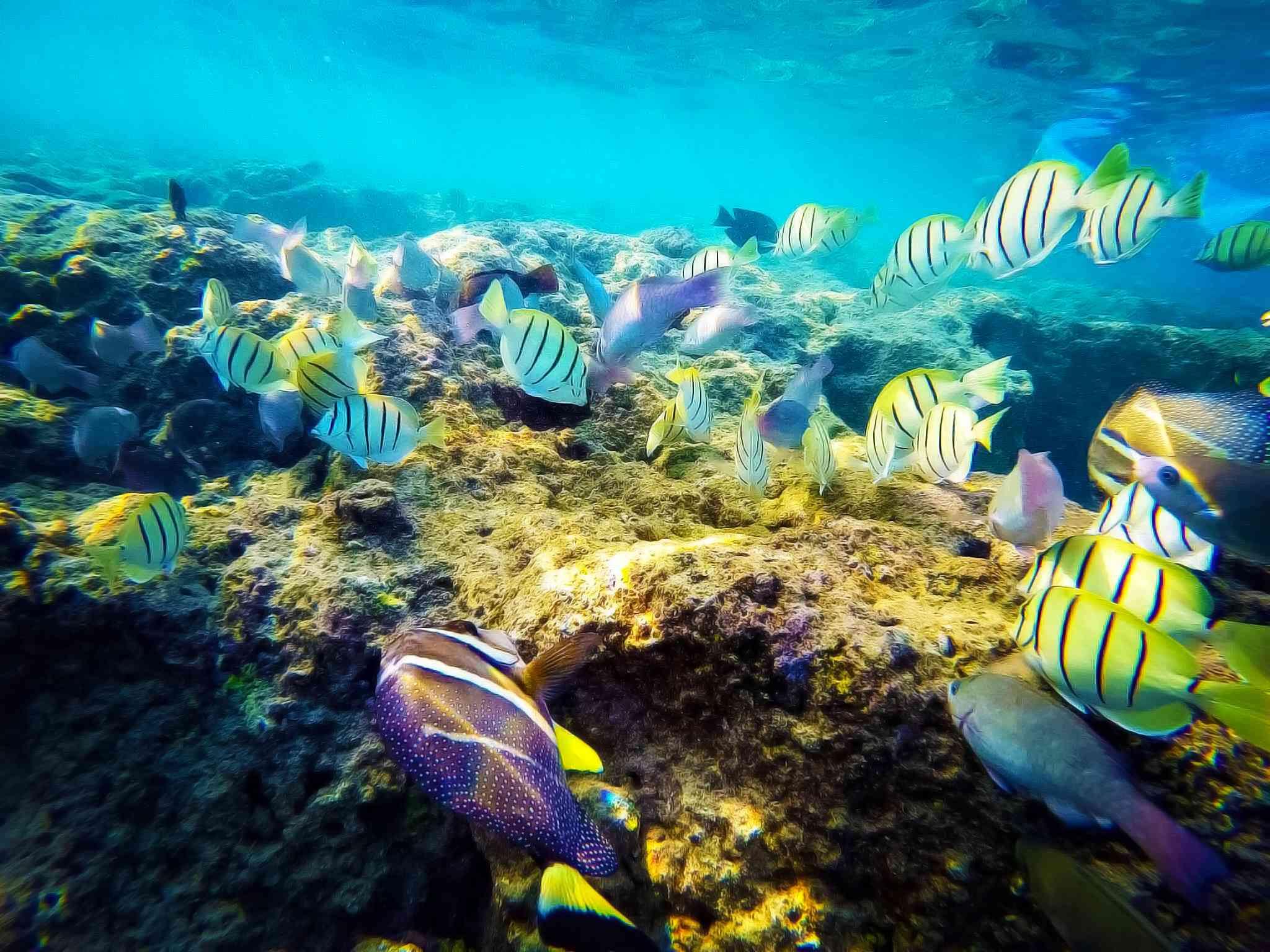 Colorful fish at Hanauma Bay in Hawaii