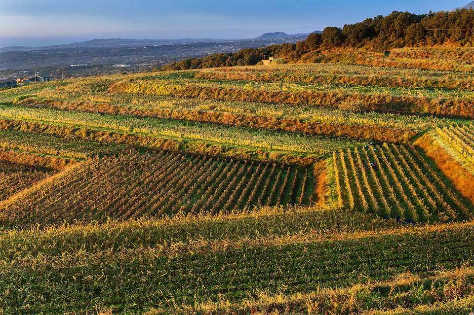 Terraced vineyards at Barone di Villagrande in fall