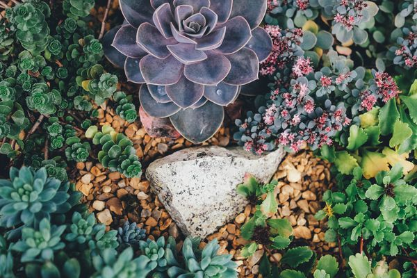 A picture of a succulent garden with several plants