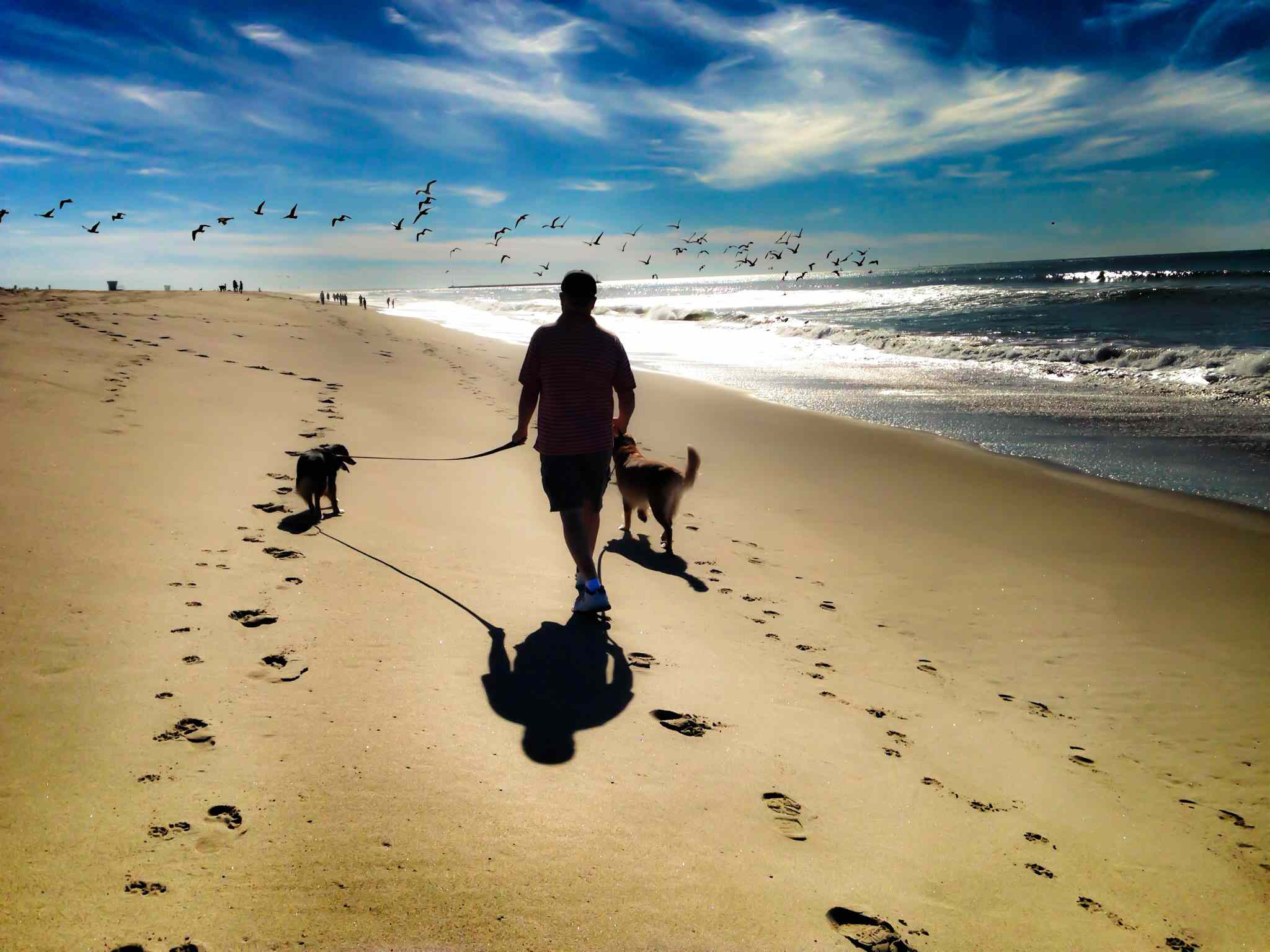 Walking the Dogs on Hollywood Beach