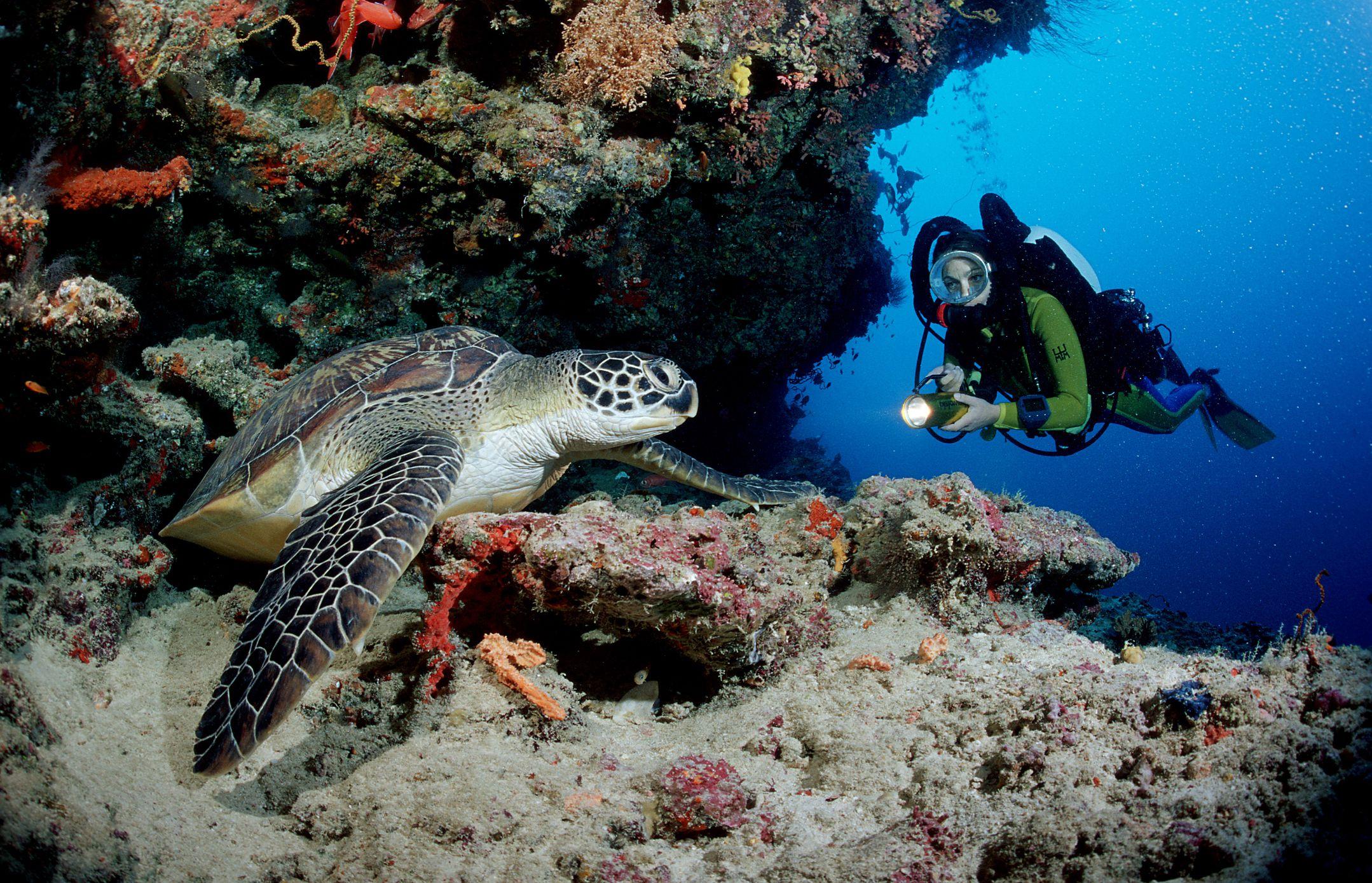 Green Turtle and scuba diver, Ari Atol, Maldives Island