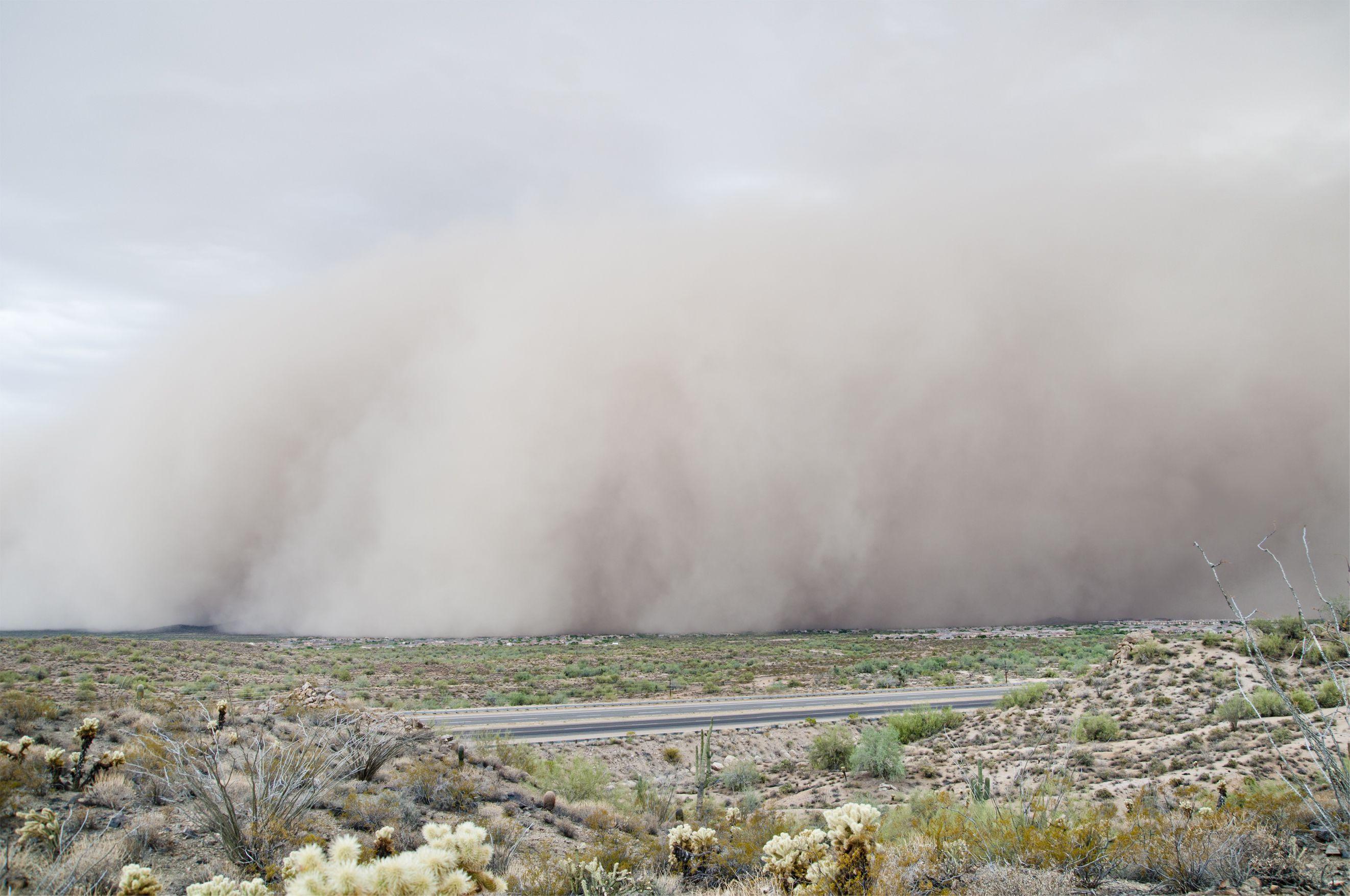 Common Allergies in Phoenix