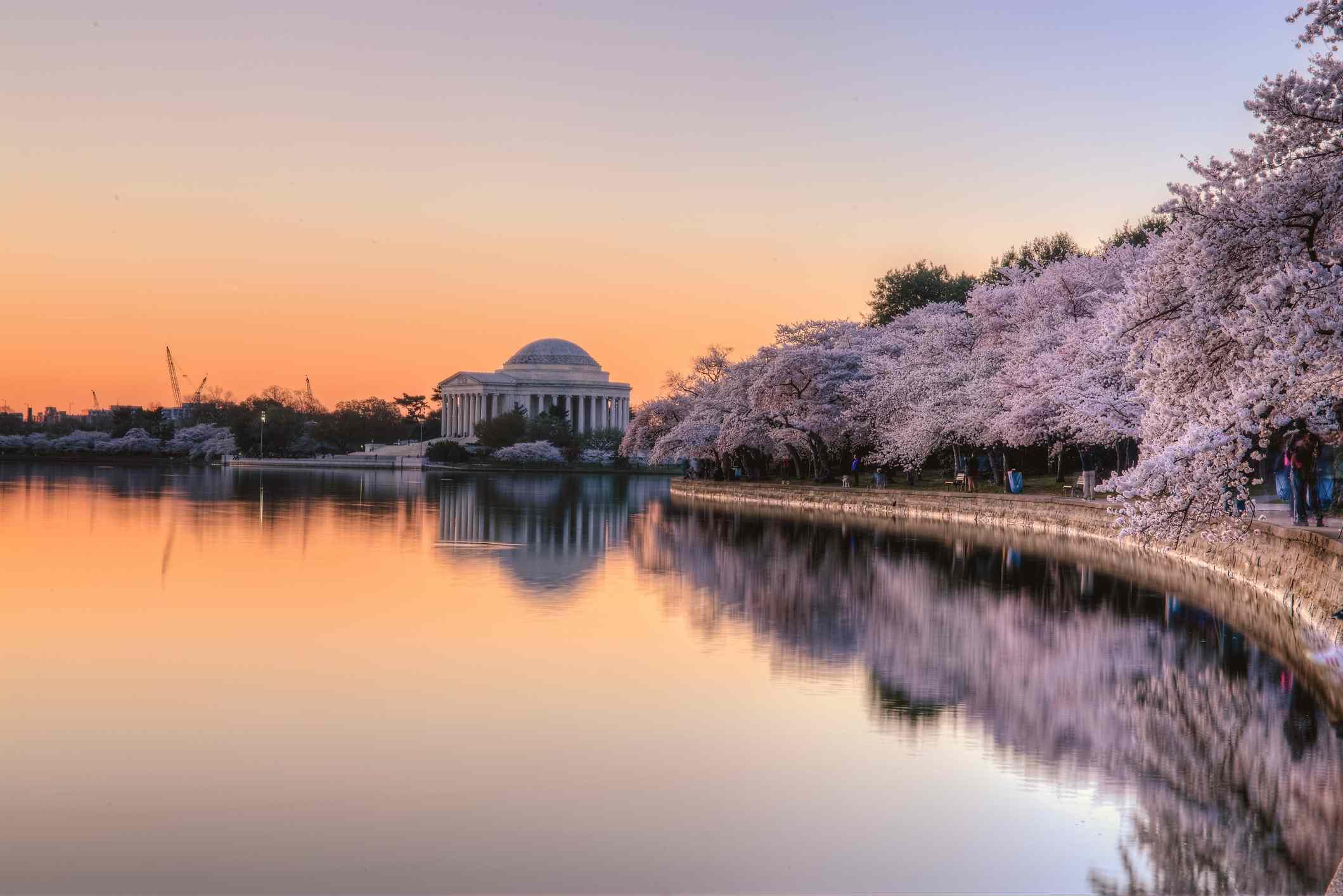 Cherry Blossom sunrise over Jefferson Memorial by tidal basic