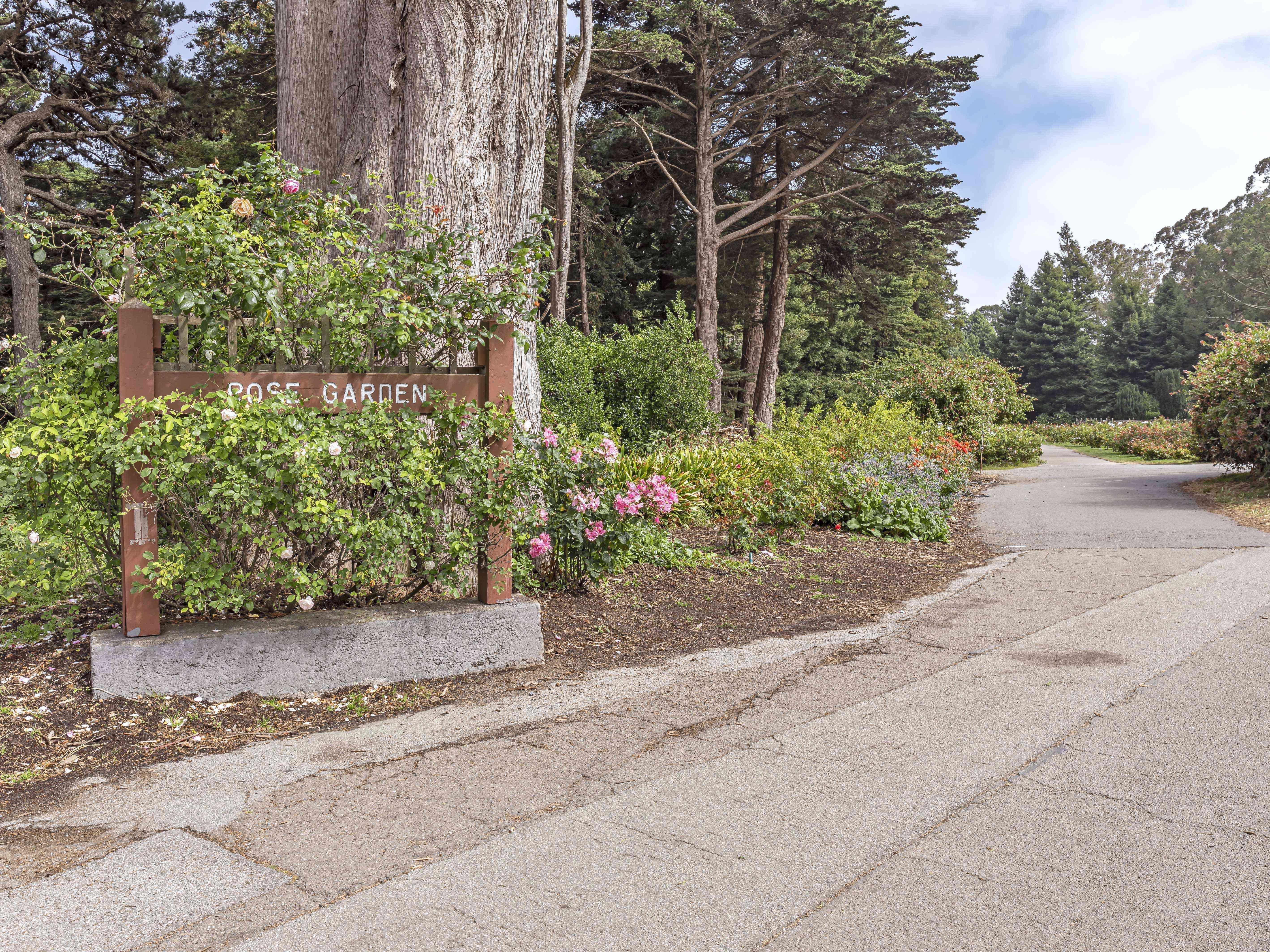 The rose garden sign overtaken by a rose bush