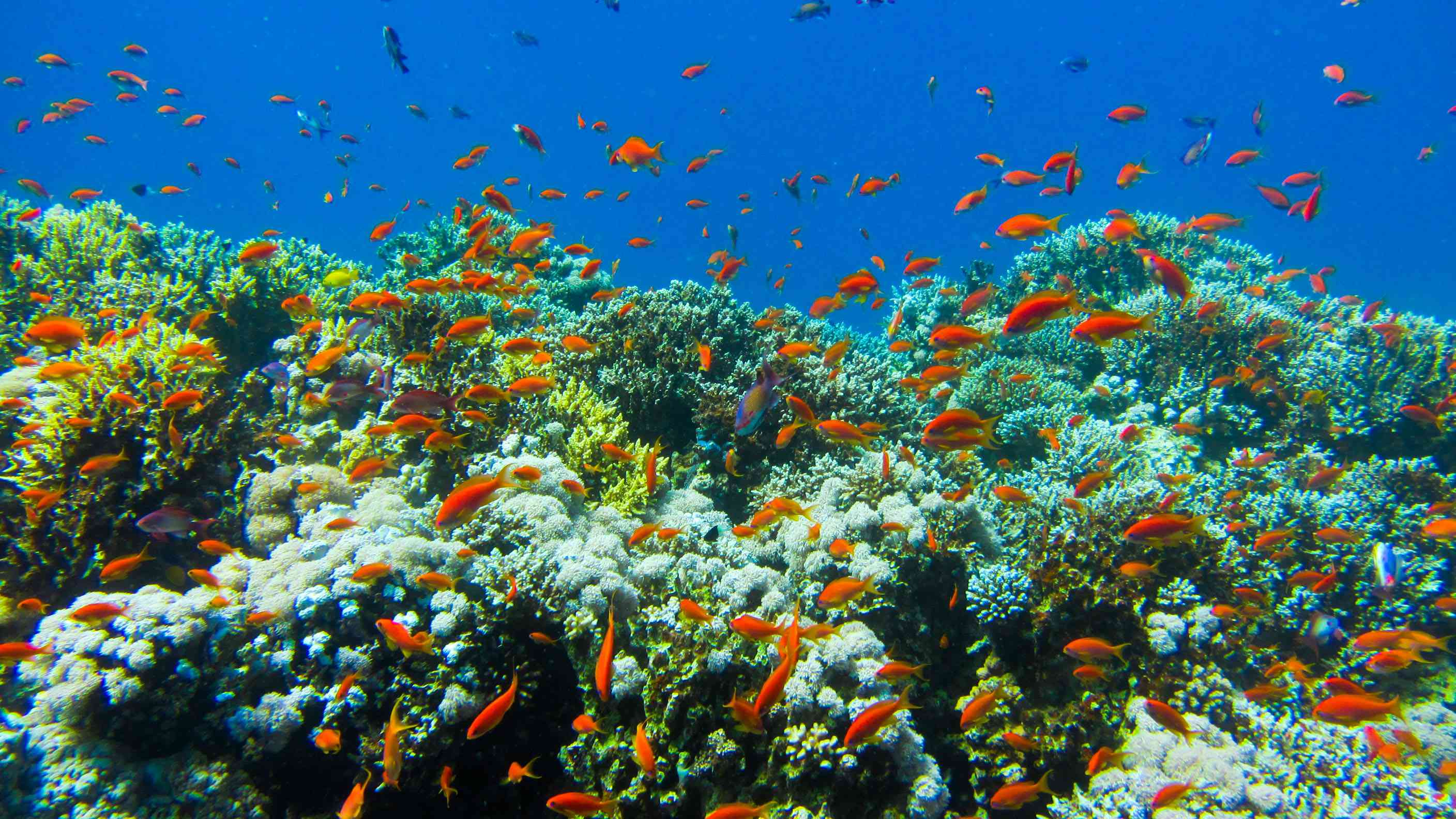 Colorful fish school on reef