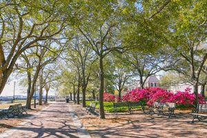 Waterfront Park Downtown Charleston