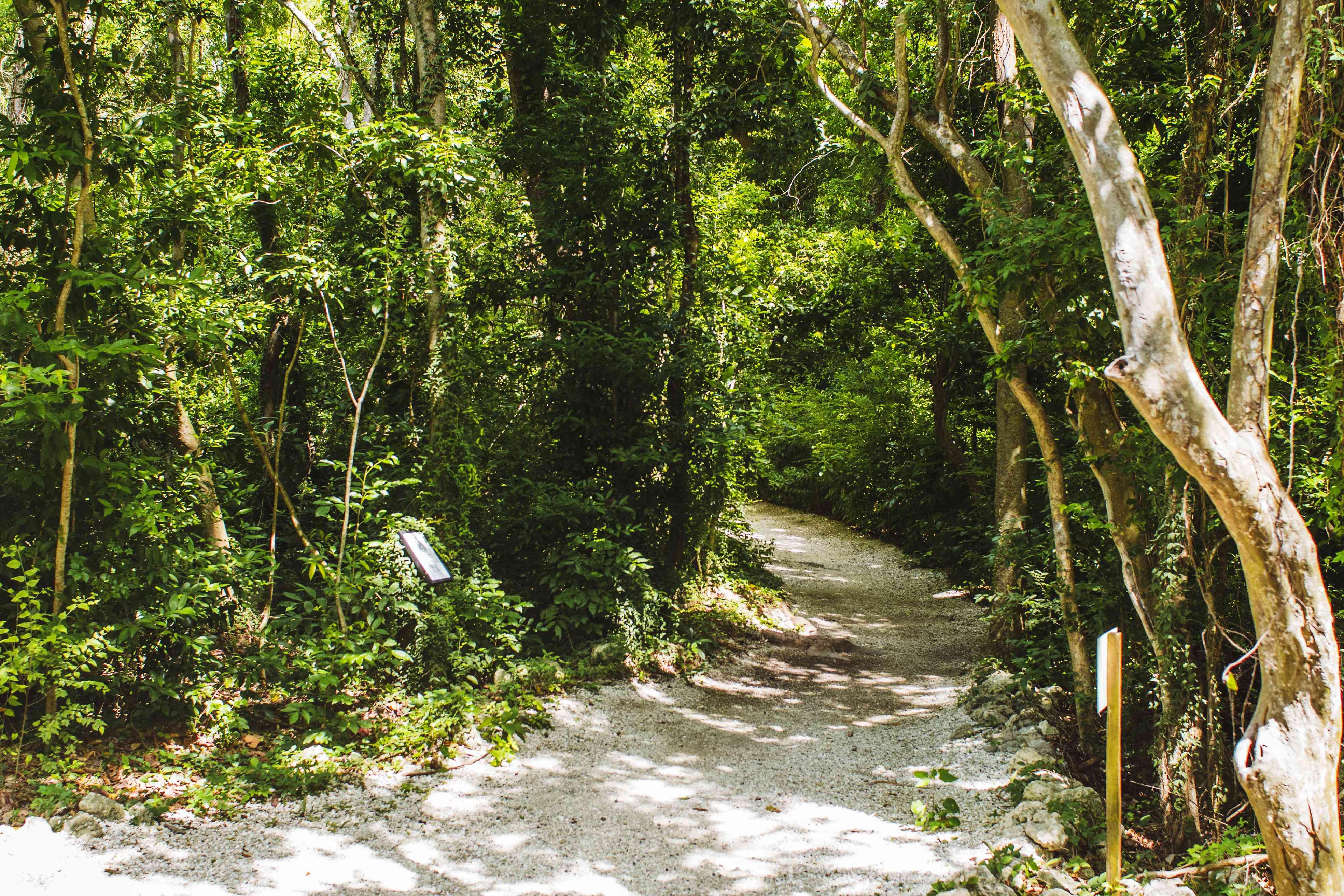 Nature trail in Simpson Park Hammock