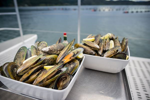 cooked mussels in white bowls with sea in the background