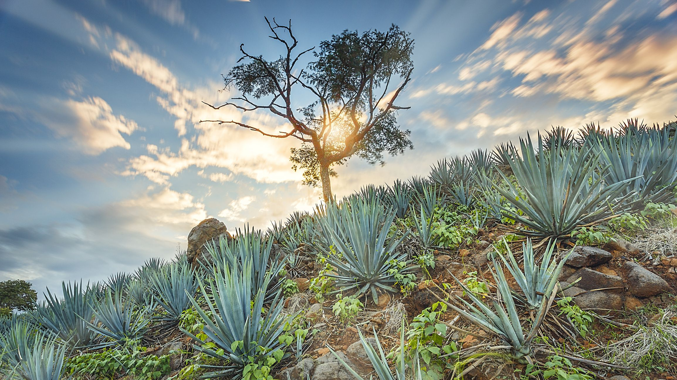 Things To Do In Tequila Jalisco Mexico