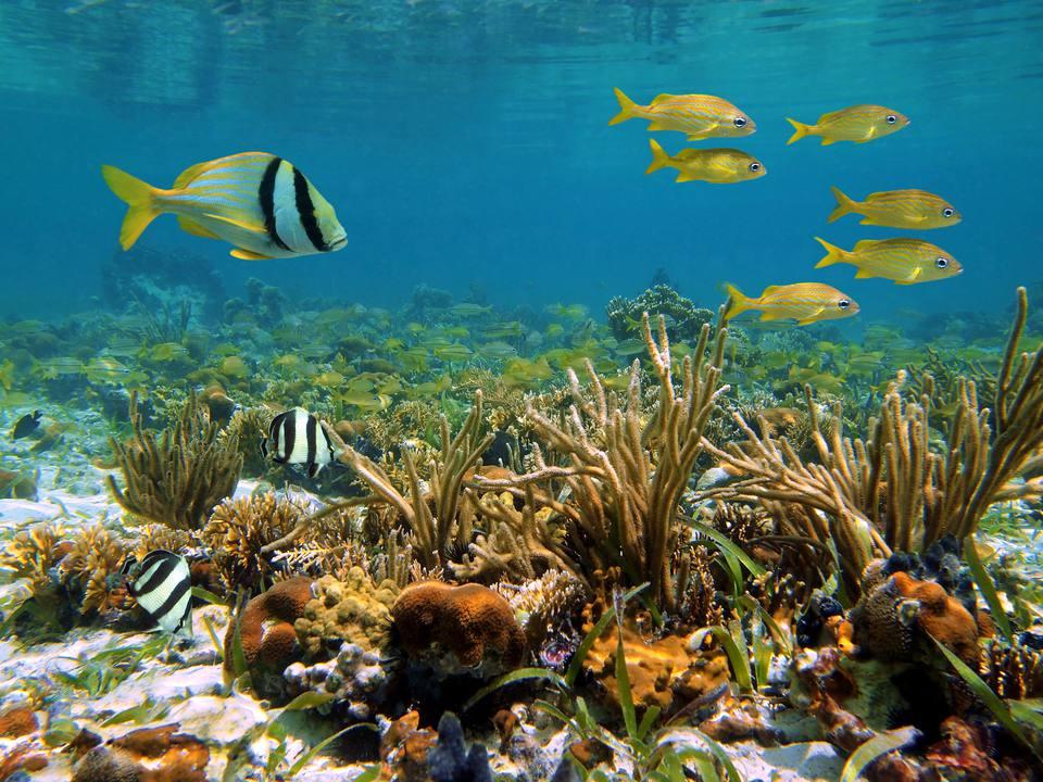 Marine life in Bocas Del Toro, Panama