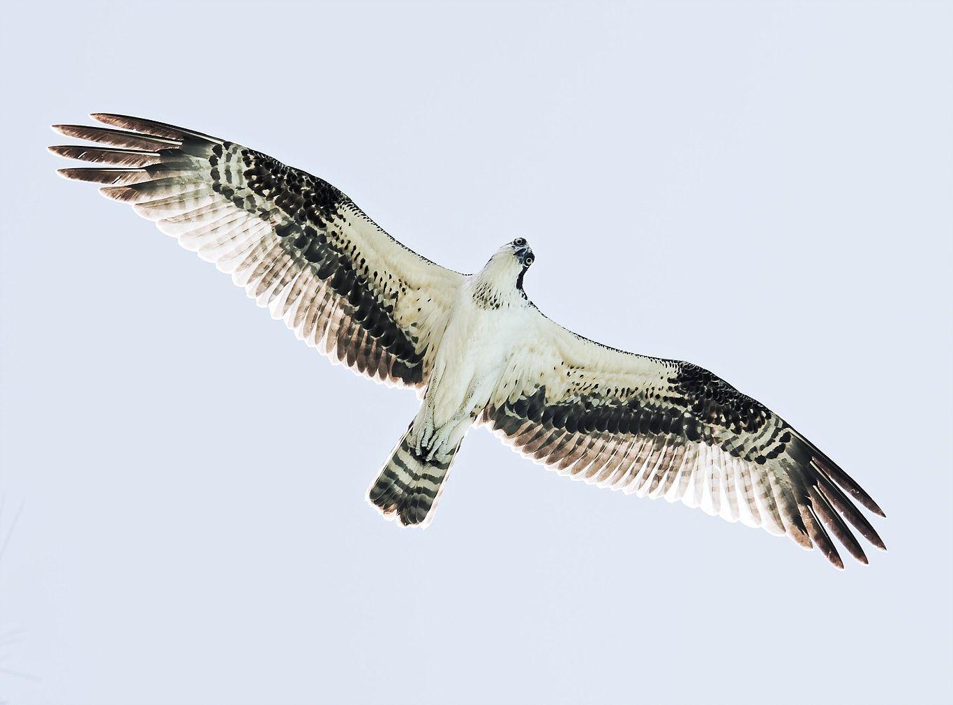 White and black bird flying overhead