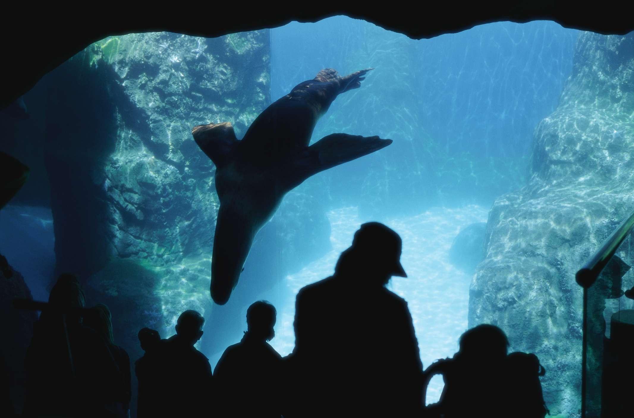 Visitantes observando leones marinos en el zoológico de Oregón