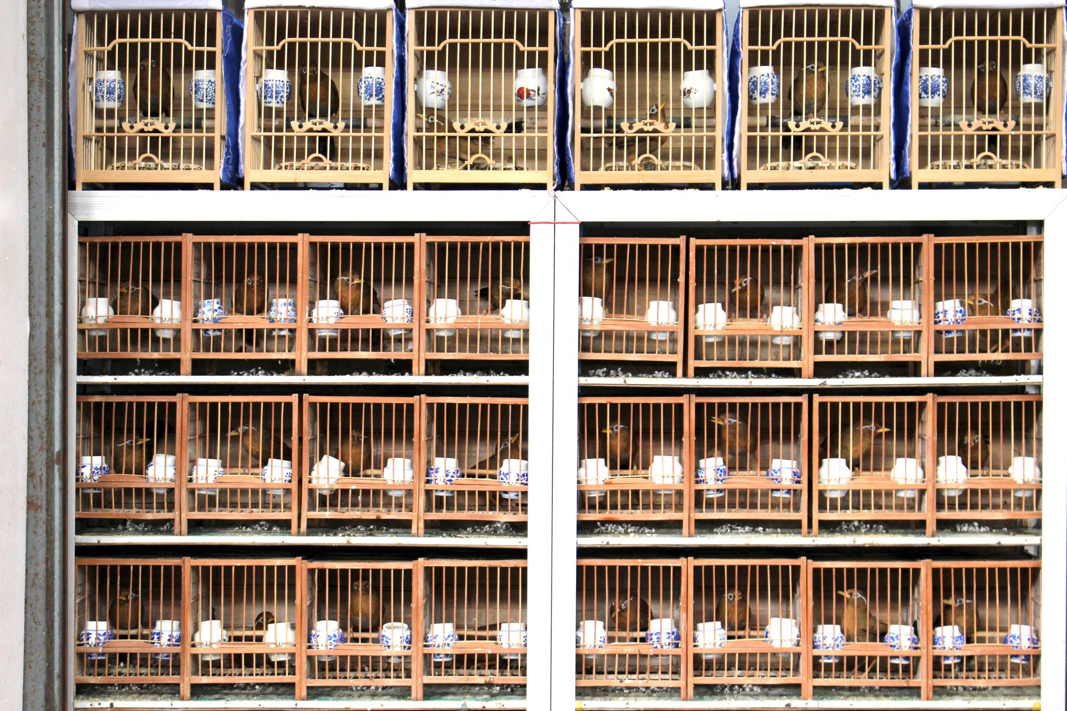 View of bamboo bird cages in the flower, bird, cricket, and fish market in the old part of Shanghai, China.