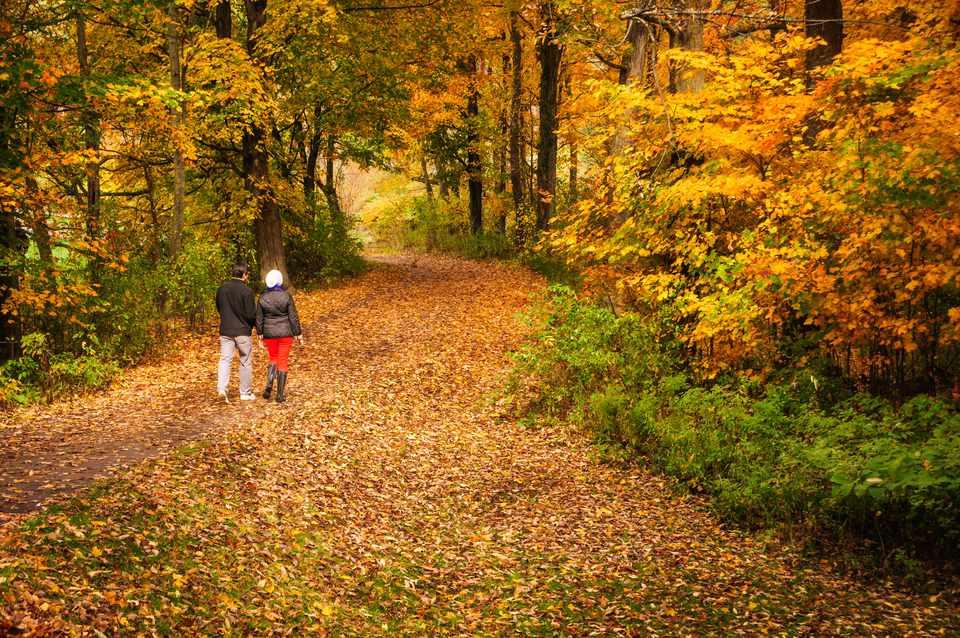 Stowe Woodland Walk - Best Fall Foliage in New England