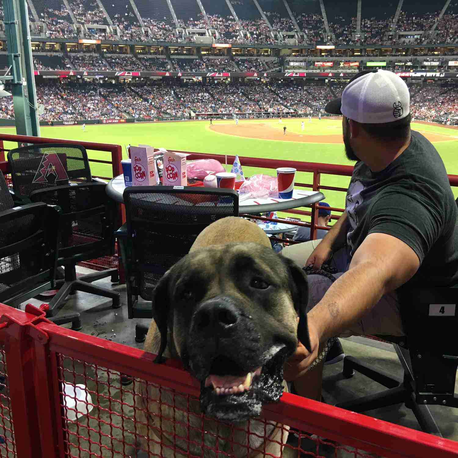 Dogs have their day at Chase Field