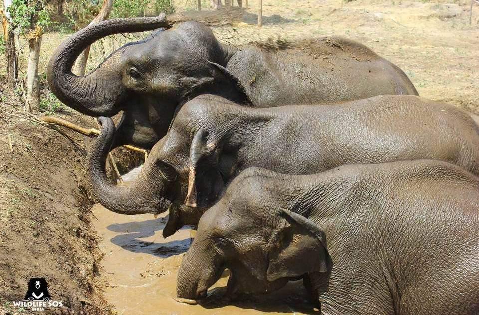 Elephants at Wildlife SOS