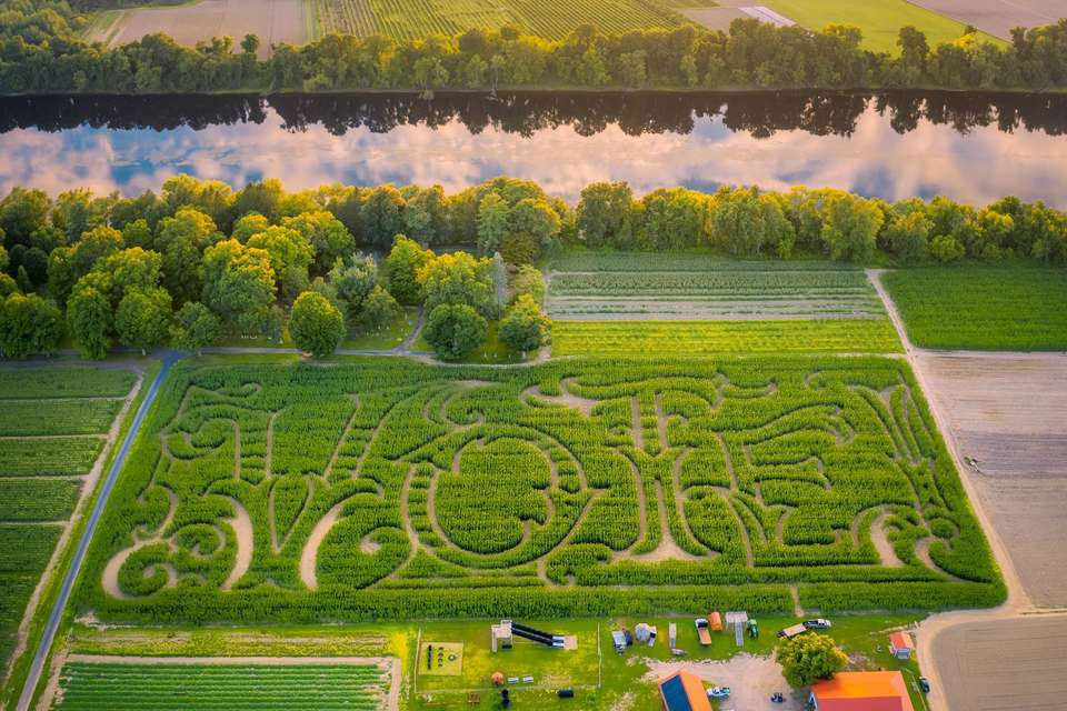 Mike's Maze 2020: VOTE! The stalks have never been higher...