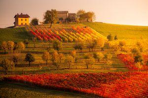 Castelvetro, Modena. Vineyards in autumn