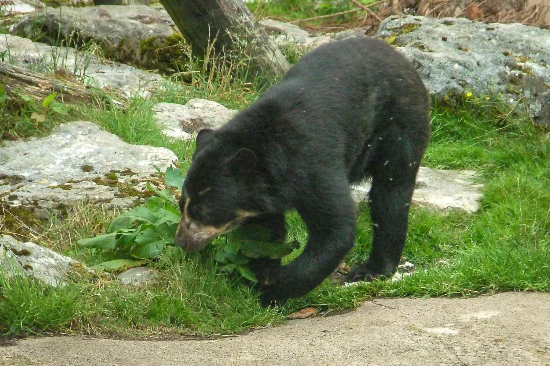 Bear necessities at Belfast Zoo.