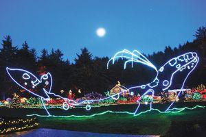 Coos Bay, Oregon Christmas lights