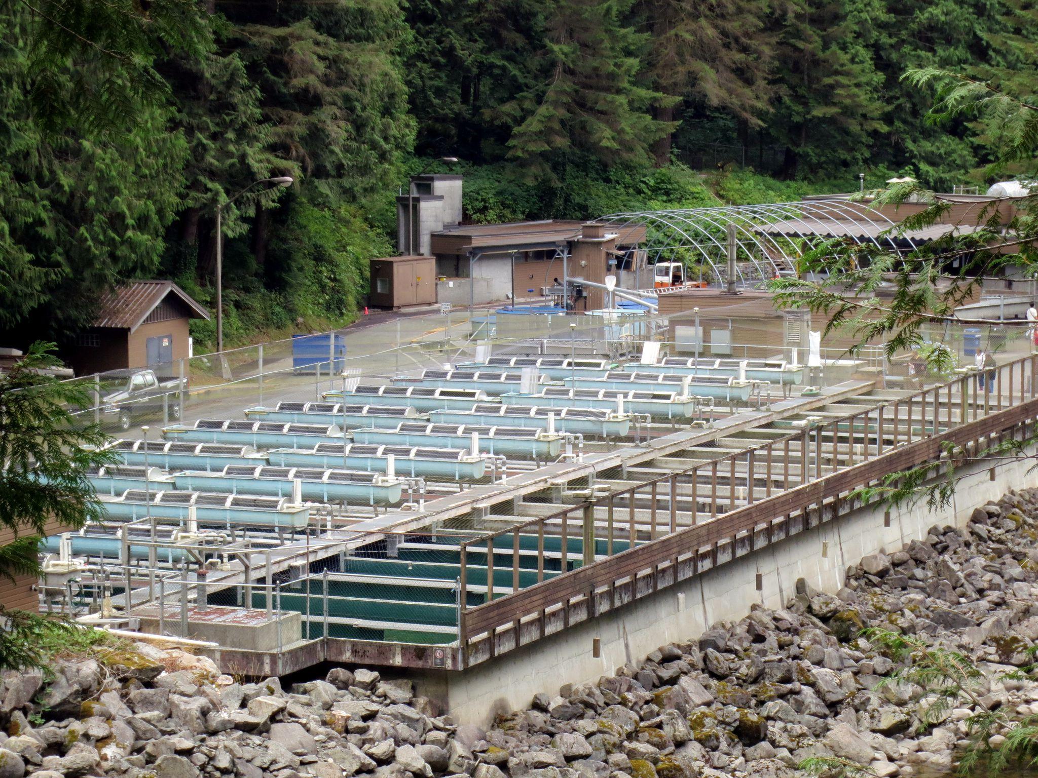 Capilano Salmon Hatchery