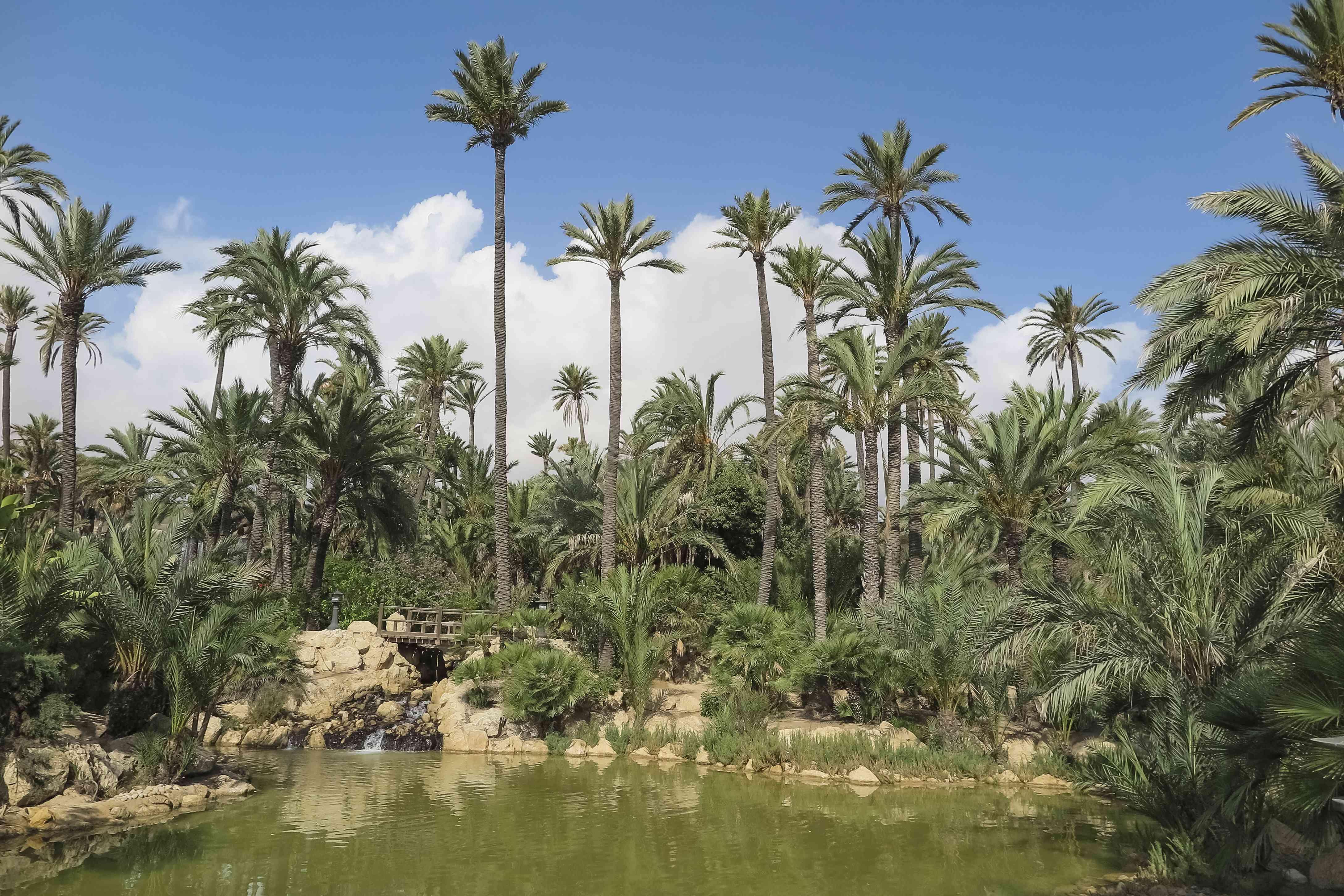 landscape inside El palmeral park