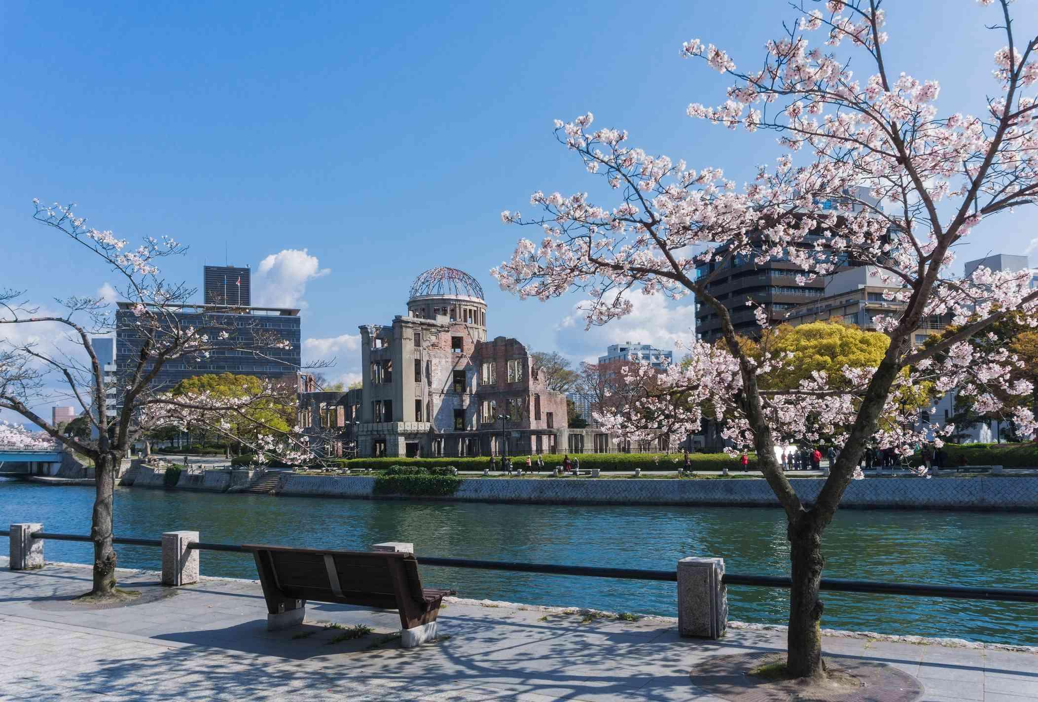cherry blossom tree alongside a river