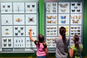 A woman and two children look at specimens at the Montreal Insectarium