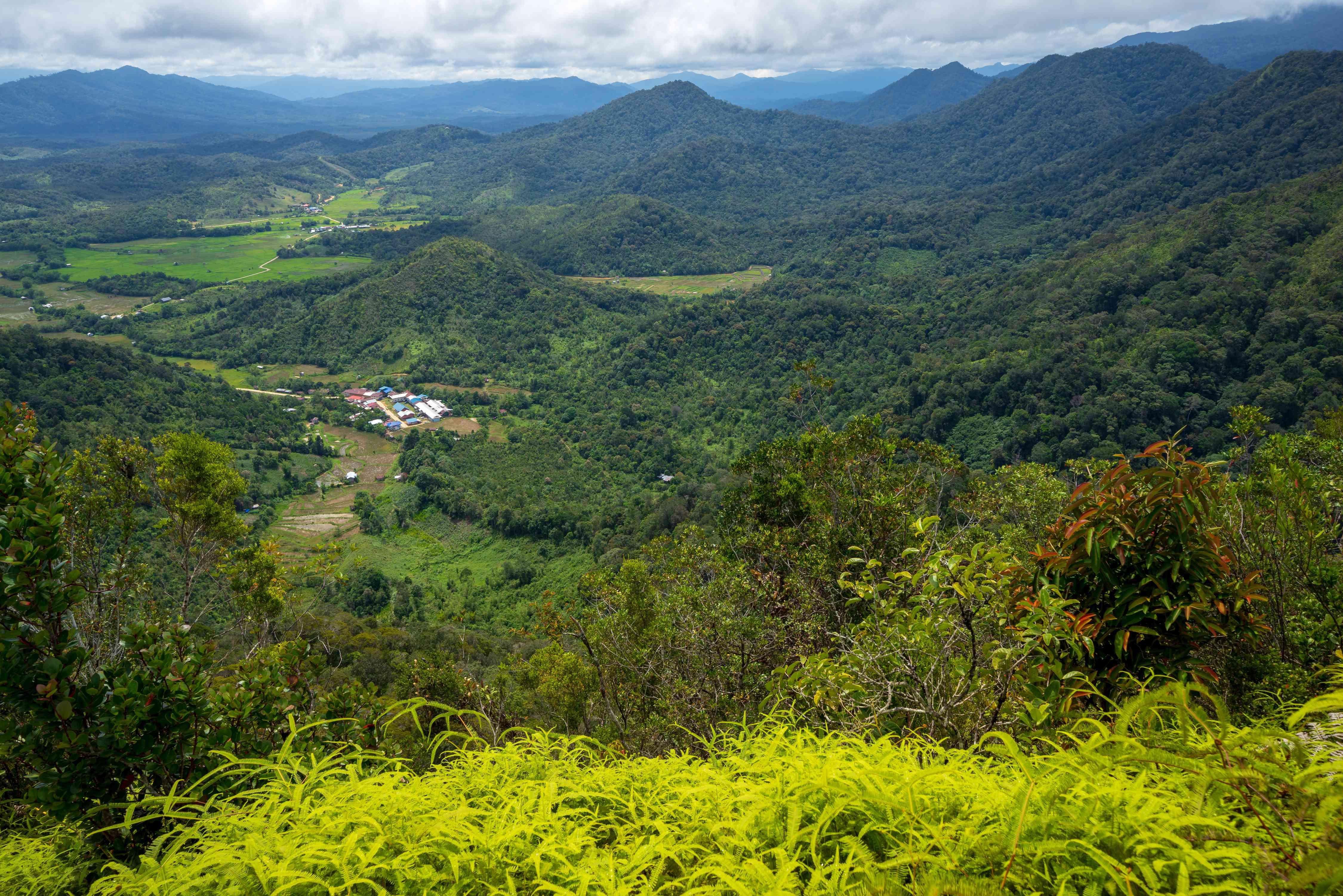 The green Bario Highlands in Borneo