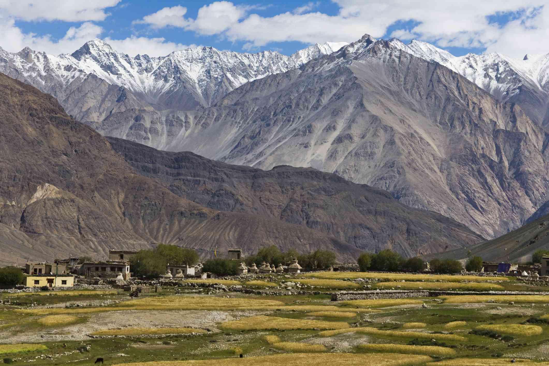 Barley field and village in the Karakorum, Nubra Valley.