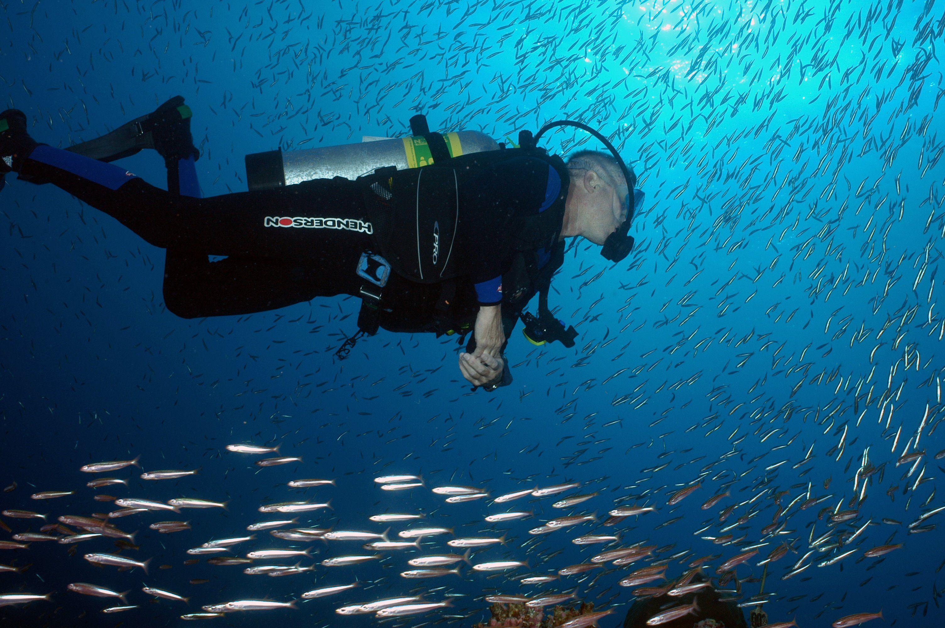 Scuba diver amid school of fish
