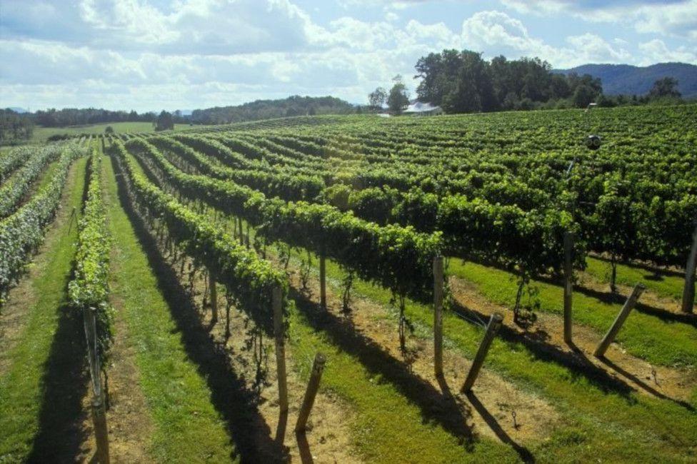 The Botetourt Wine Trail