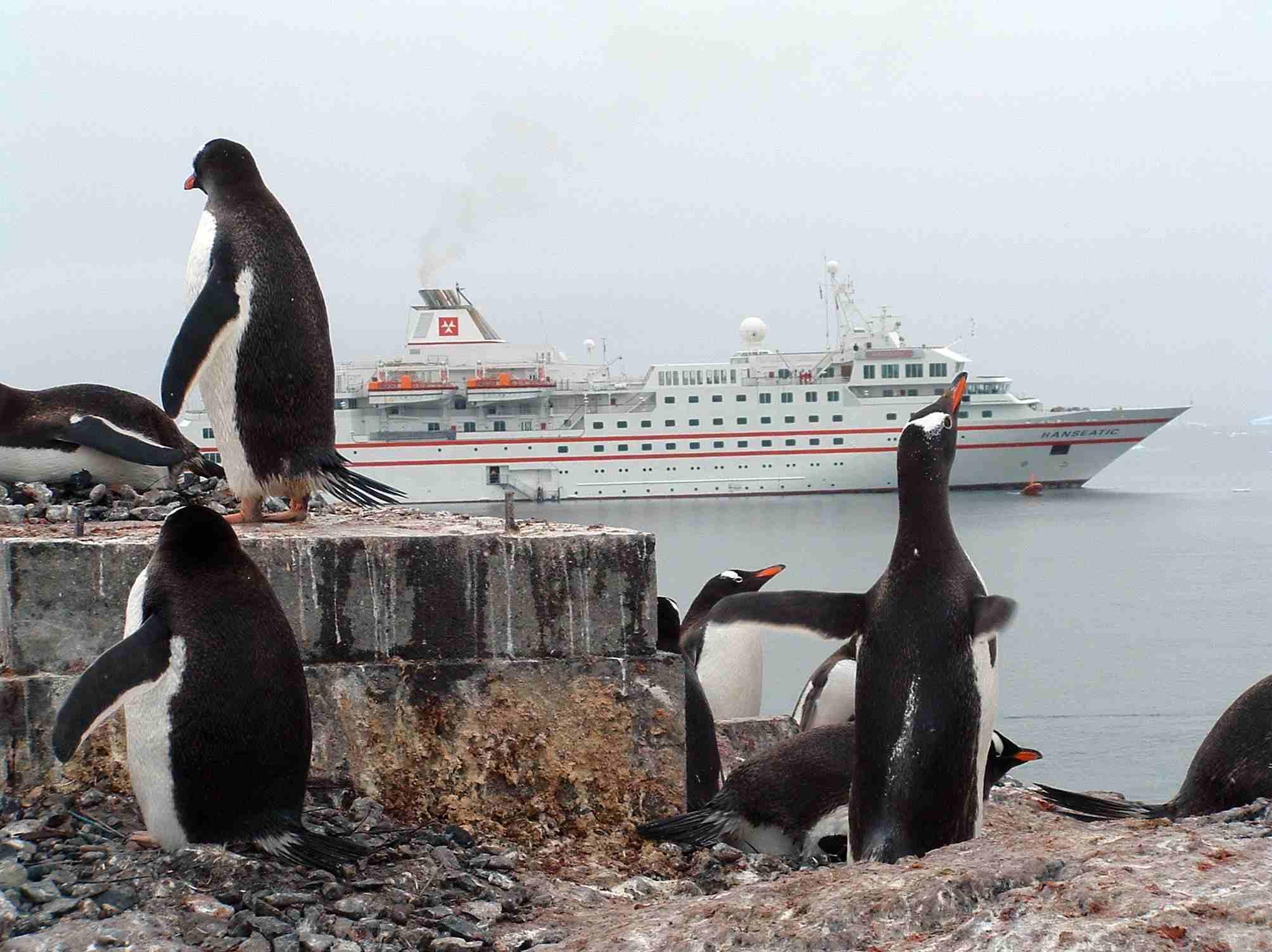 25 Penguin Photos from Antarctica