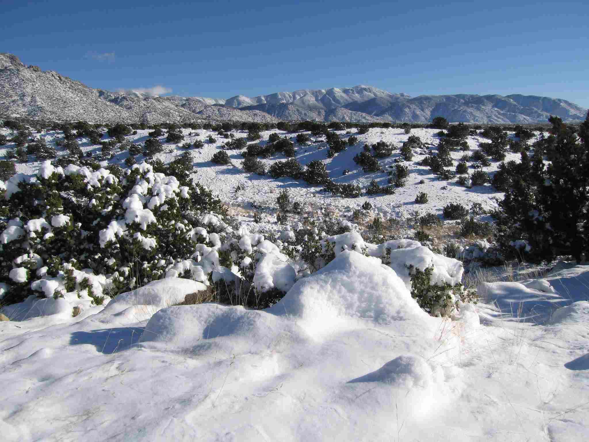albuquerque during snowfall