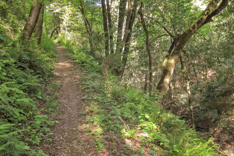 Trail in the Los Trancos Preserve