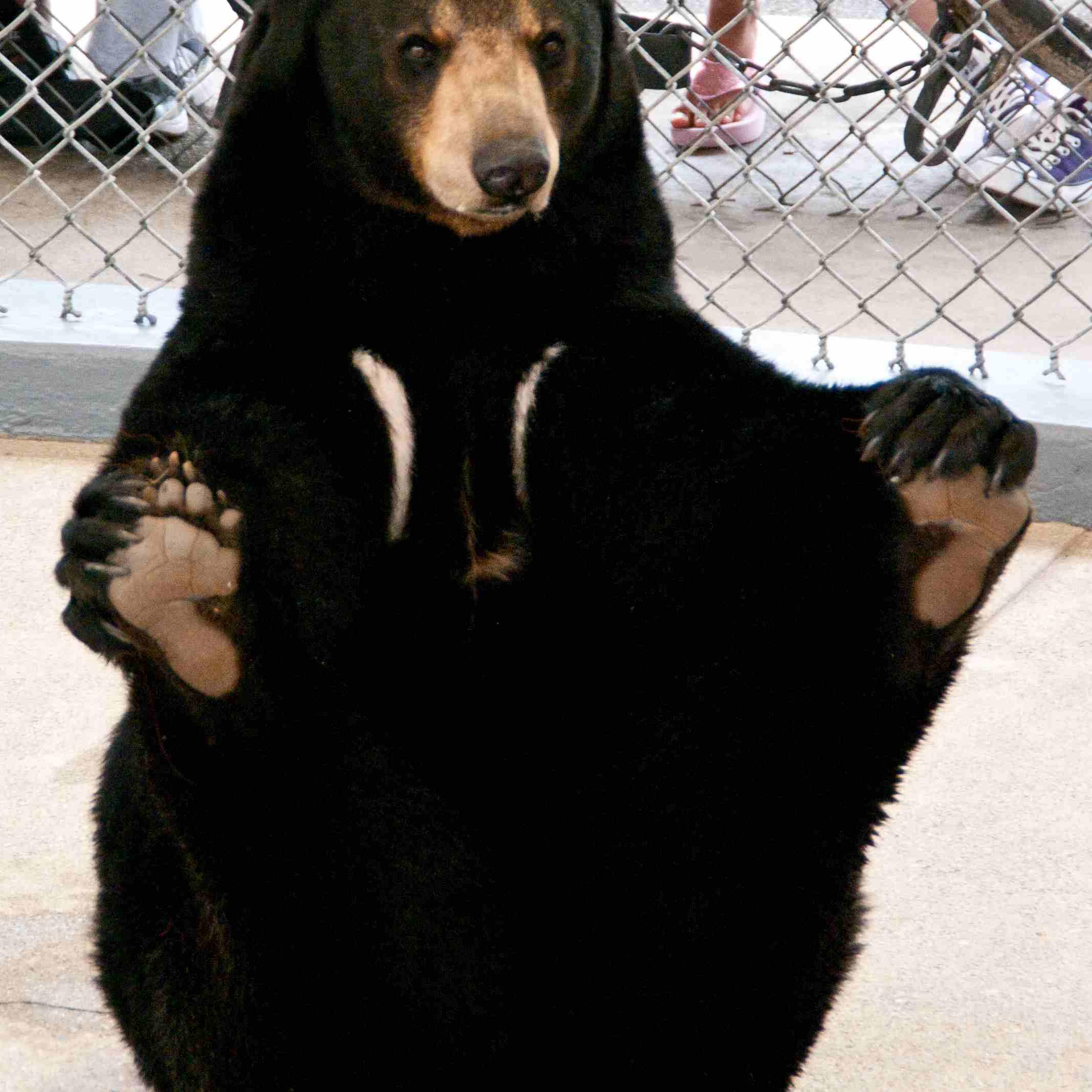 Bear Show Clark's Trading Post