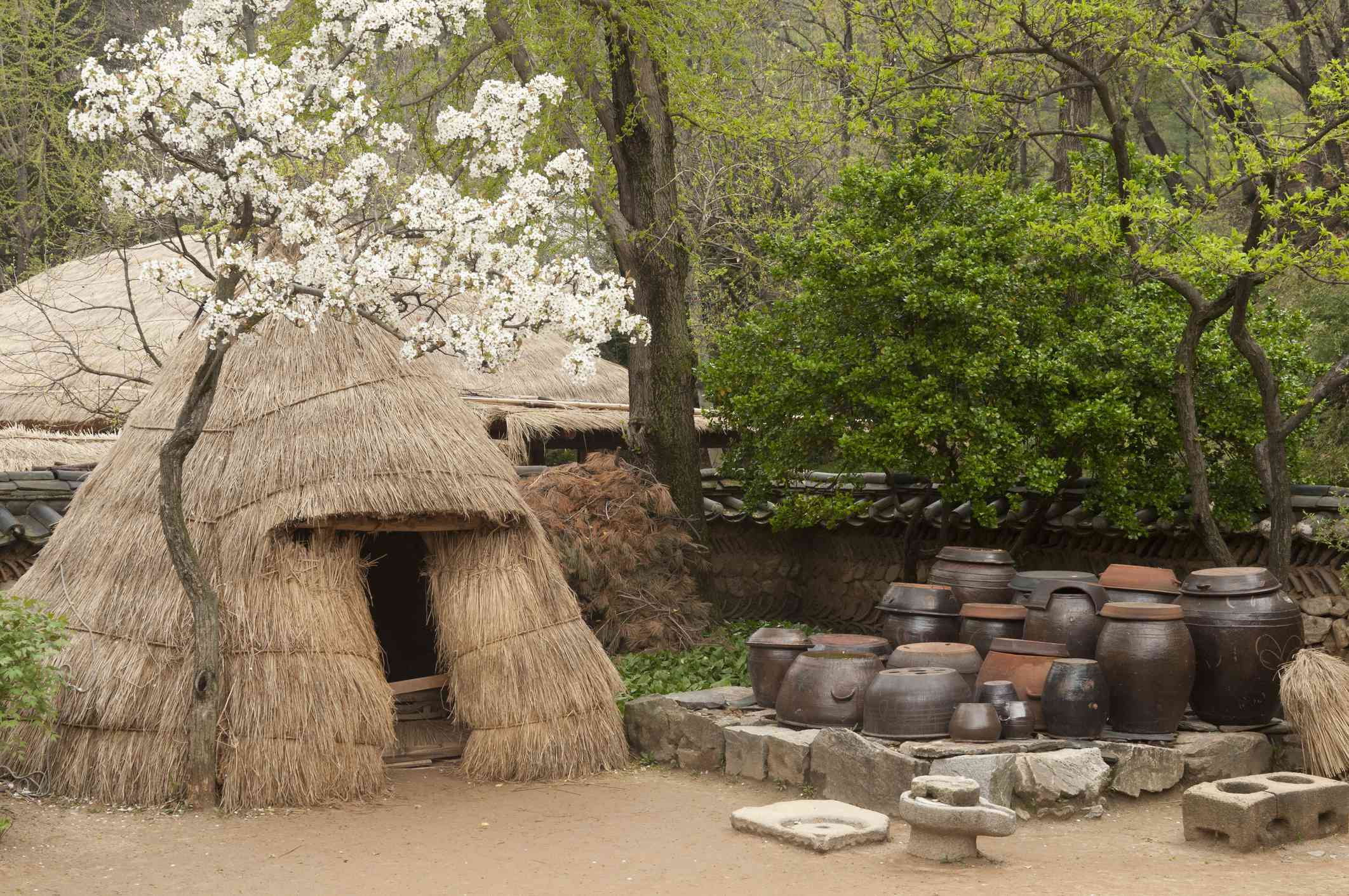 Pottery and pottery making tools with blossoms, Korean Folk Village, Cheung-gu