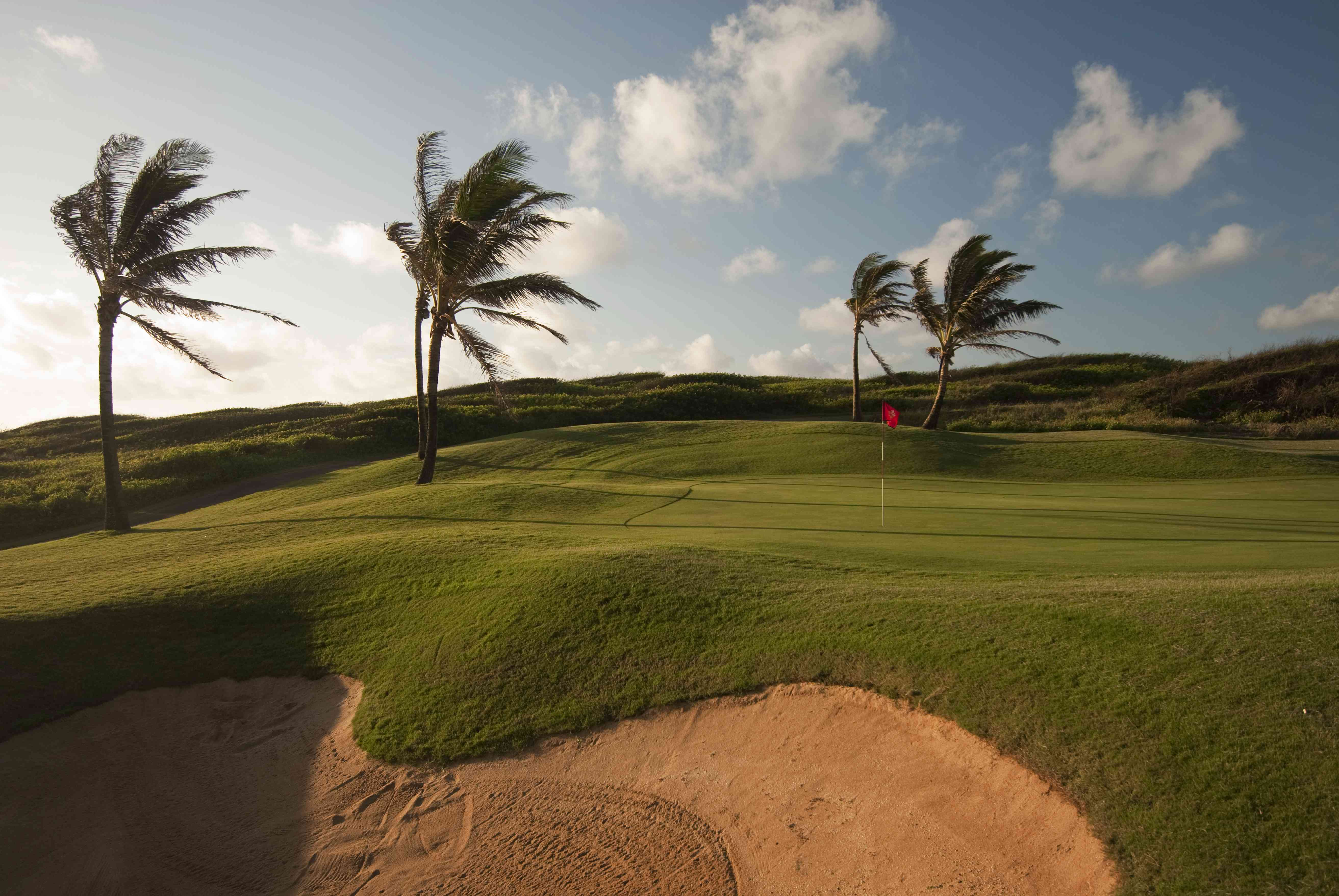 palm trees blowing in the wind on a golf course at Poipu Bay Resort