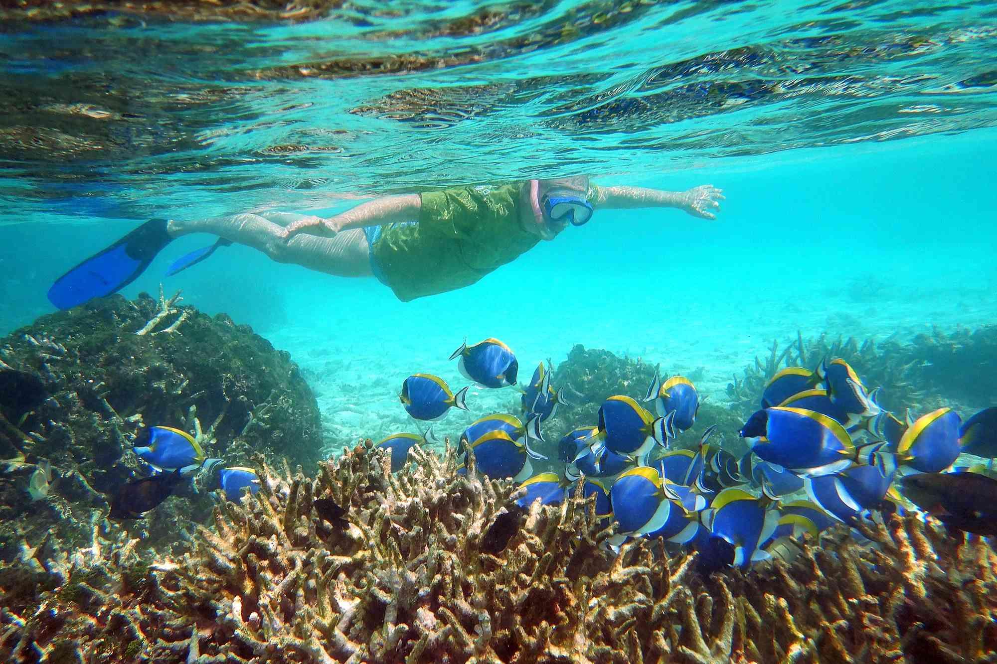 North Male Atoll Snorkeling.