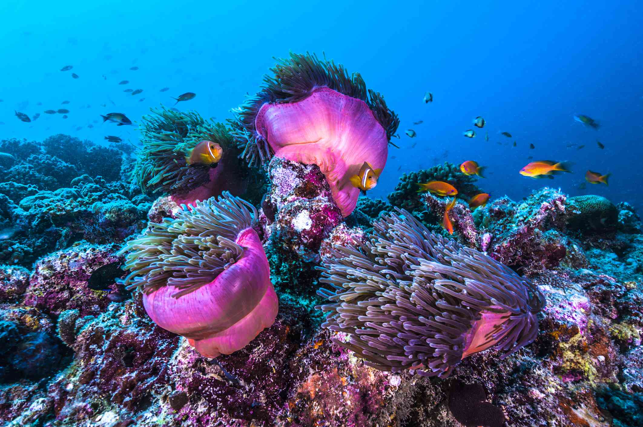 A school of fish in The Maldives