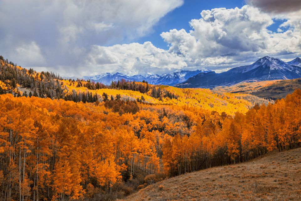 orange and yellow treed on on ahill side with snowy mountains in the background