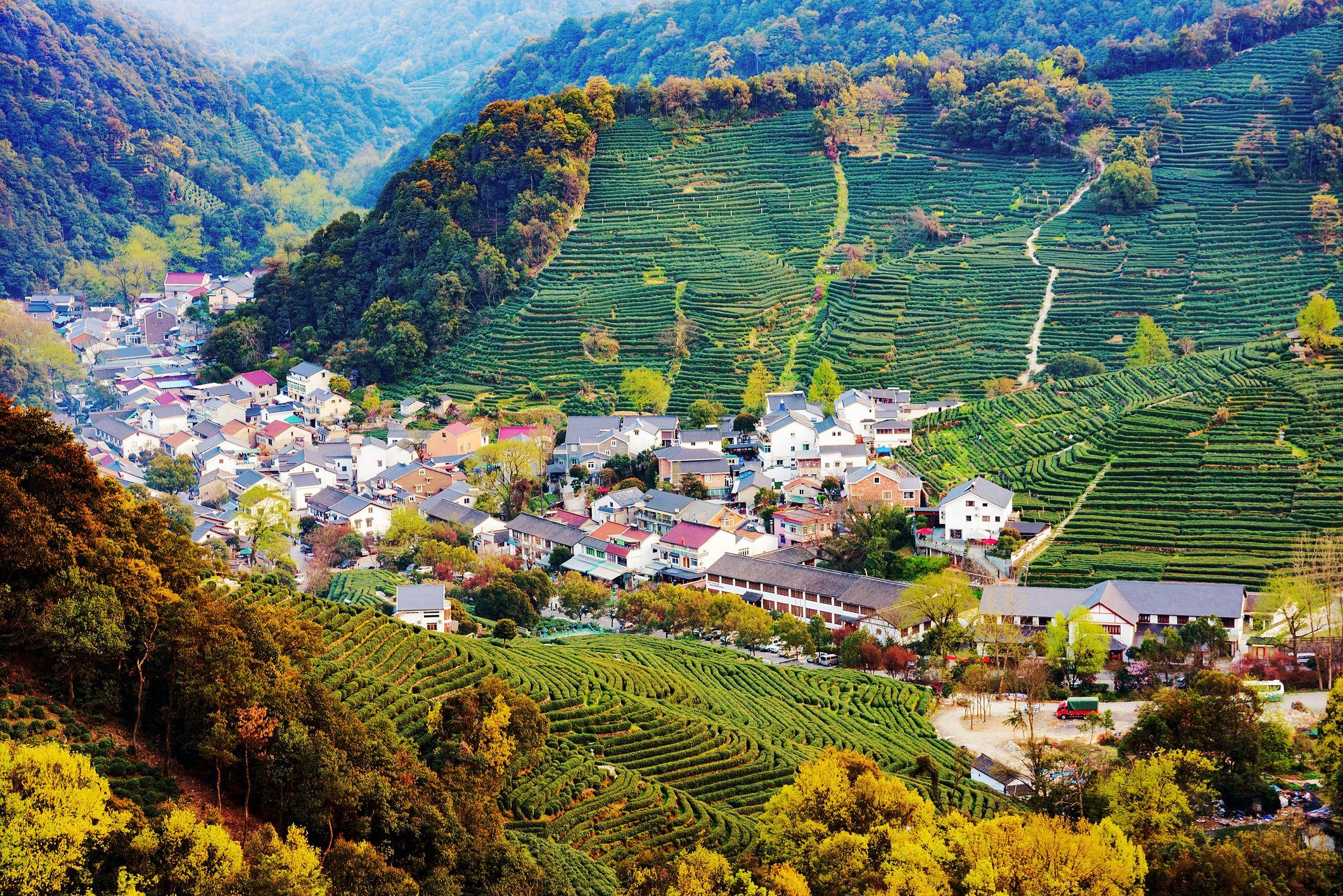 High view of Longjing