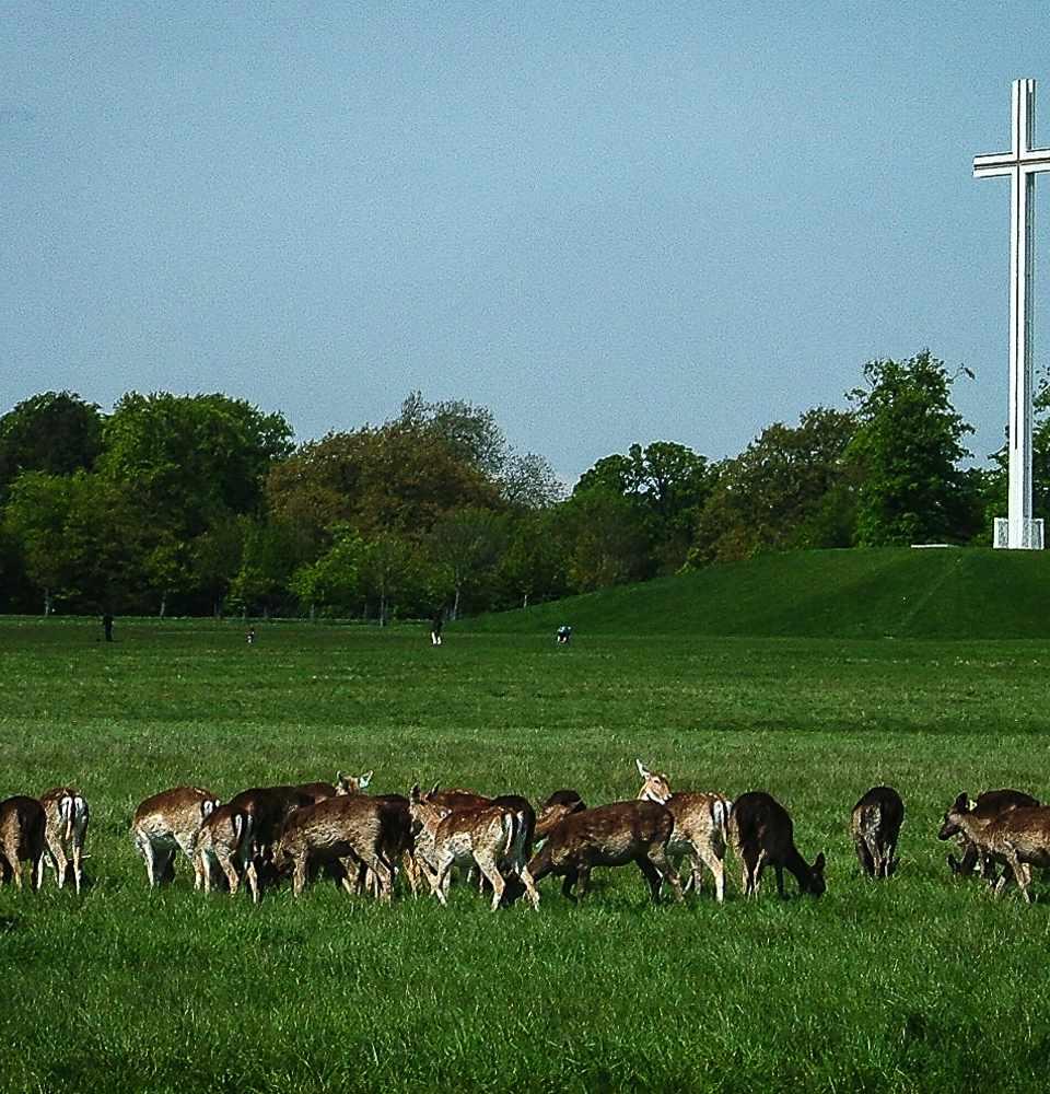 Deer grazing near the Papal Cross in Dublin's Phoenix Park