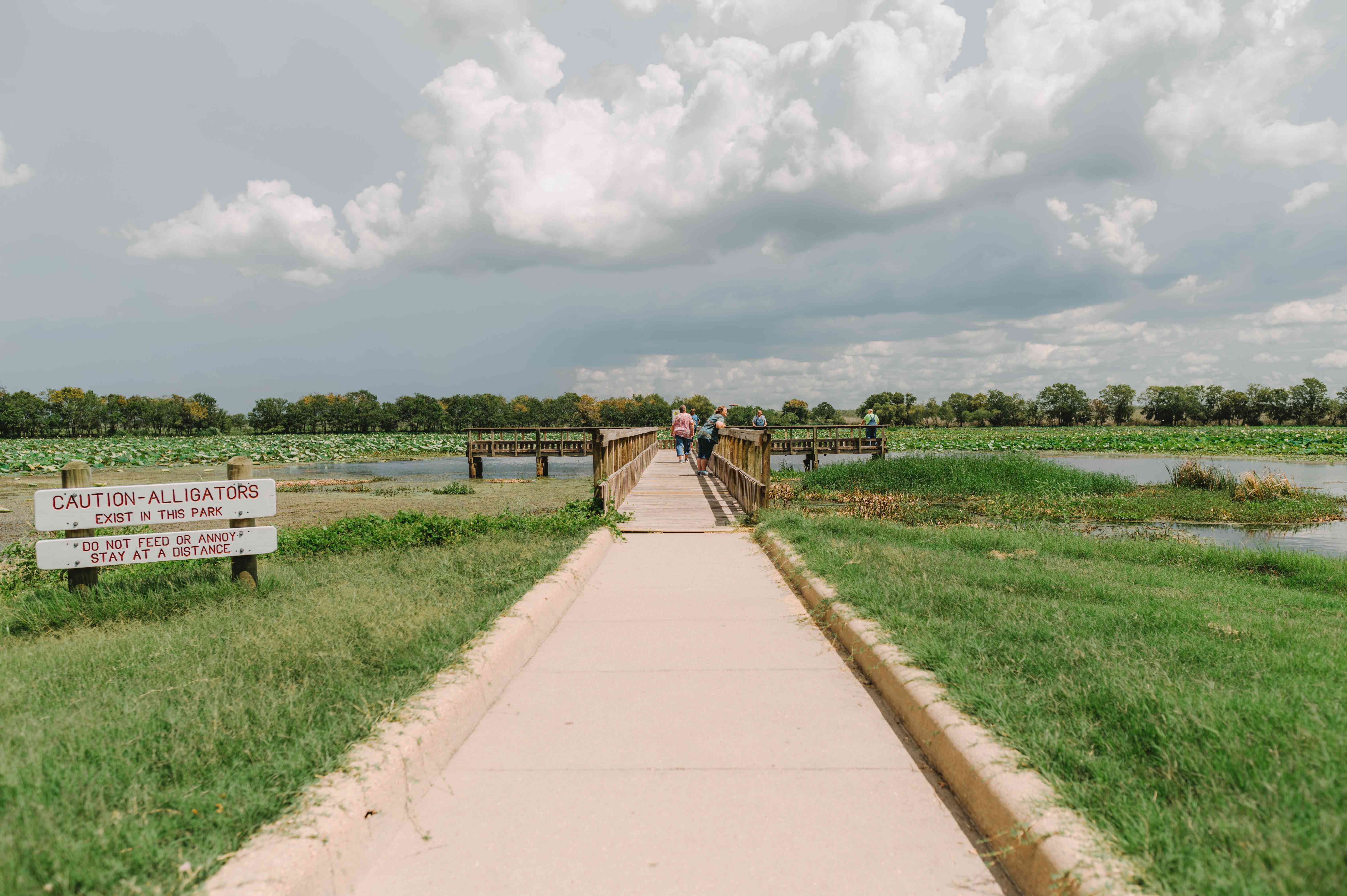 A pathway over waters where people are looking for alligators. A sign in the foreground warning to keep at a distance and not to feed or annoy the alligators