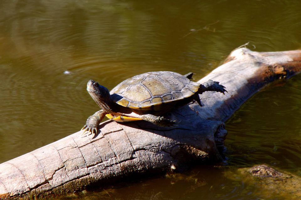 Turtles at the Rio Grande Nature Center