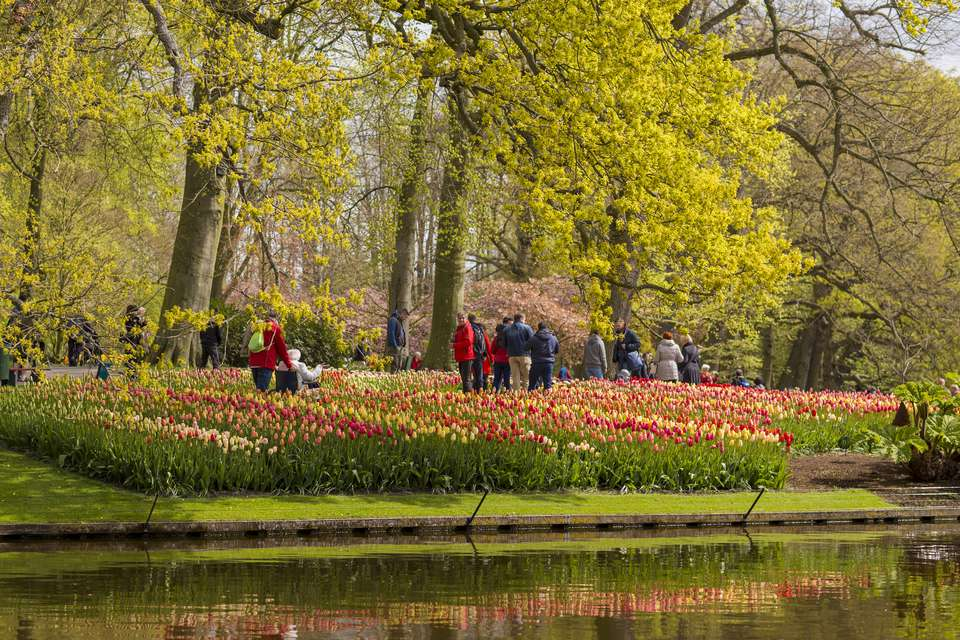 Beds of various tulips at Keukenhof lake