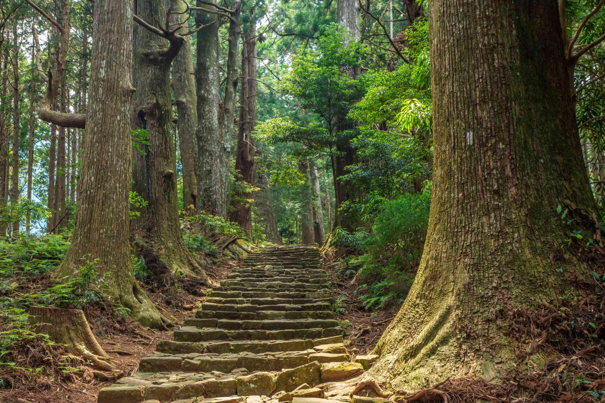 Kumano walking trail
