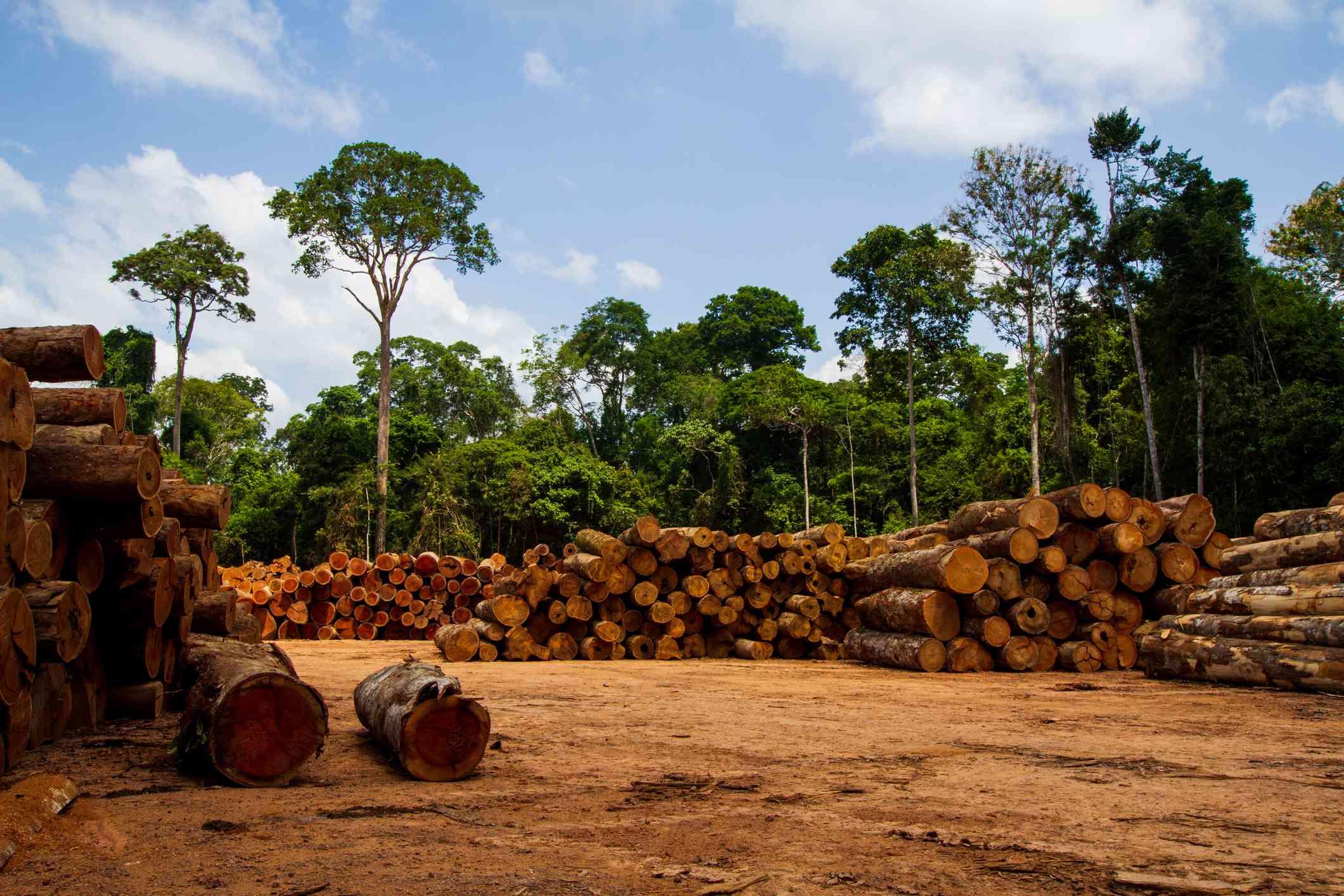 Logging operation in Brazil