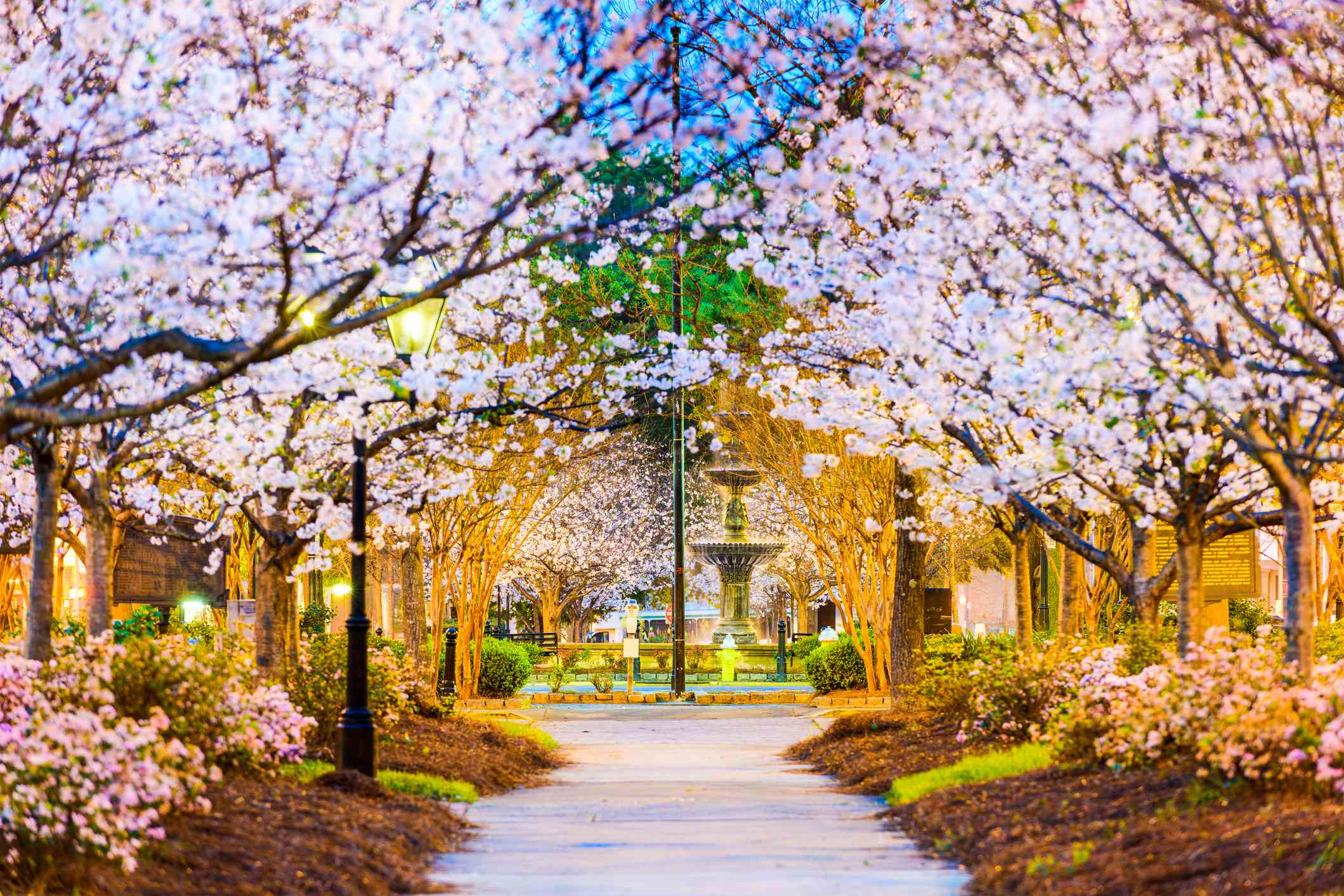Macon, Georgia with cherry blossoms